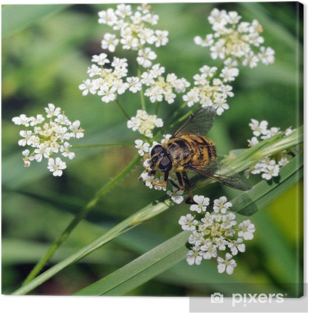 Abeille Canvas Print - Other Other