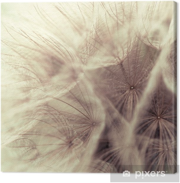 Abstract closeup of a meadow salsify Canvas Print - Styles