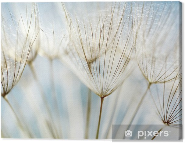 Abstract dandelion flower background Canvas Print - Themes