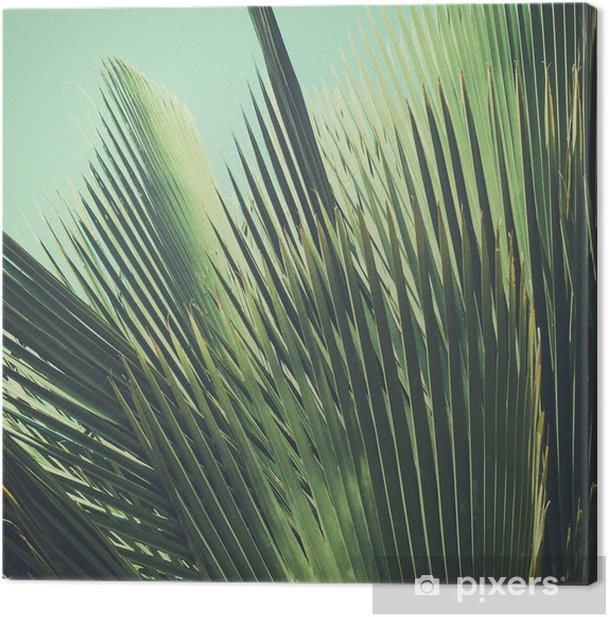 Abstract tropical vintage background. Palm leaves in sunlight. Canvas Print - Plants and Flowers