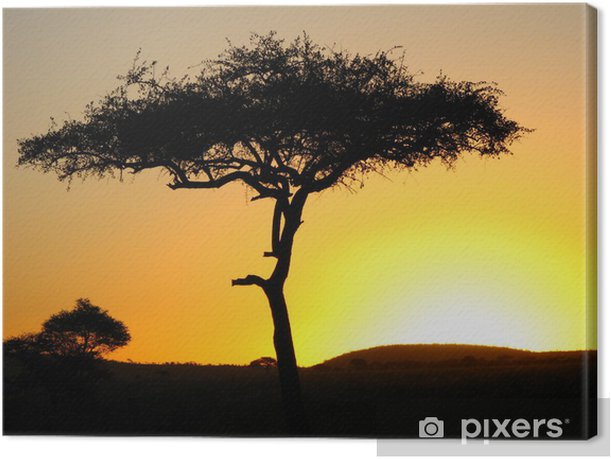 Acacia Tree In An African Sunset Canvas Print Pixers We Live To