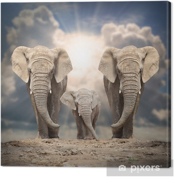 African elephant family on the road. Canvas Print - Themes