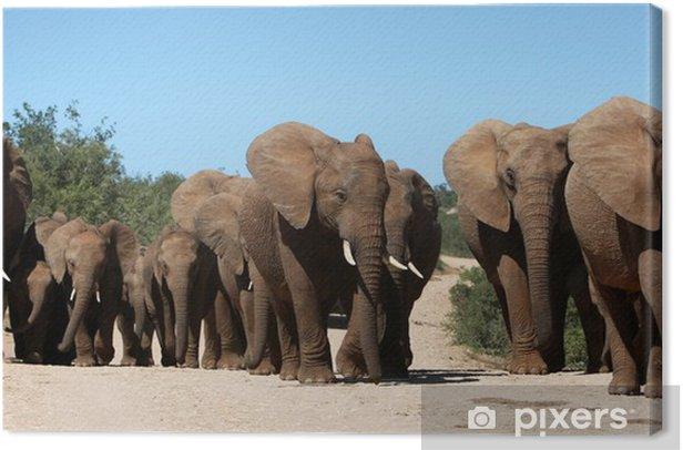 African Elephant Herd Canvas Print - Themes