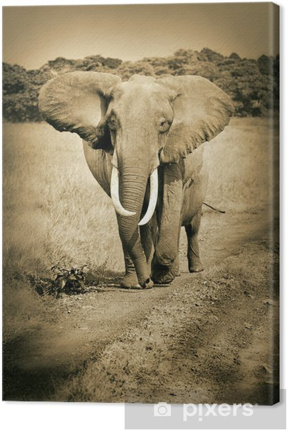 african elephant walking on the road - masai mara - sepia Canvas Print - iStaging