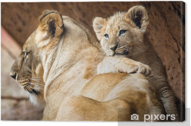 African lion cub resting on his mother lioness Canvas Print - Themes