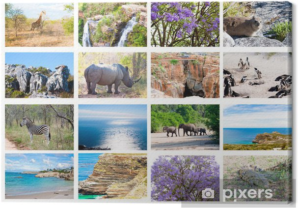 African Wild Animals Collage Fauna Natural Themed Background Canvas Print