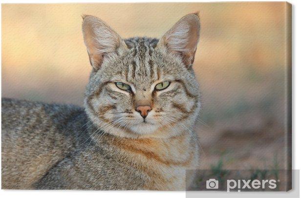 African wild cat Canvas Print - Mammals