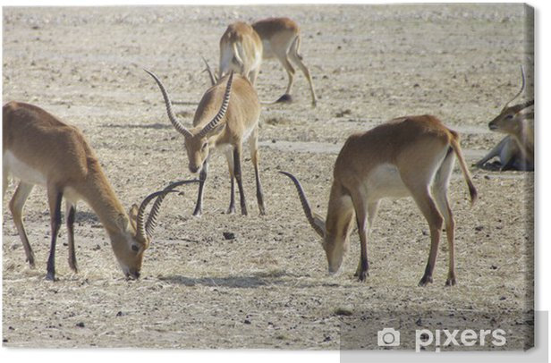afrique sauvage Canvas Print - Mammals