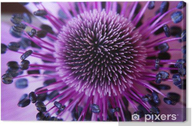anamone flower Canvas Print - Styles