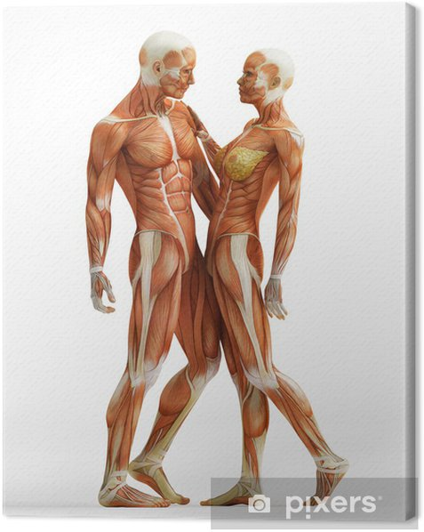 anatomy couple Canvas Print - Health and Medicine