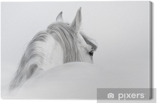 Andalusian horse in a mist Canvas Print - iStaging