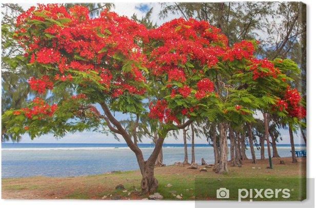 arbre flamboyant, Saint-Leu, île de la Réunion Canvas Print - iStaging
