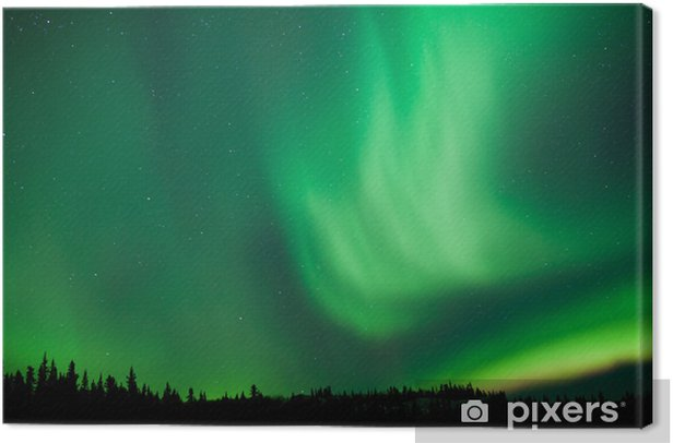 Aurora borealis substorm swirls over boreal forest Canvas Print - Wonders of Nature