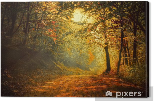 Autumn in the forest Canvas Print - Themes