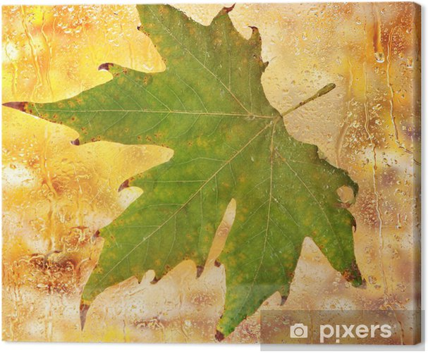 autumn maple leaf on glass with natural water drops Canvas Print - Fashion