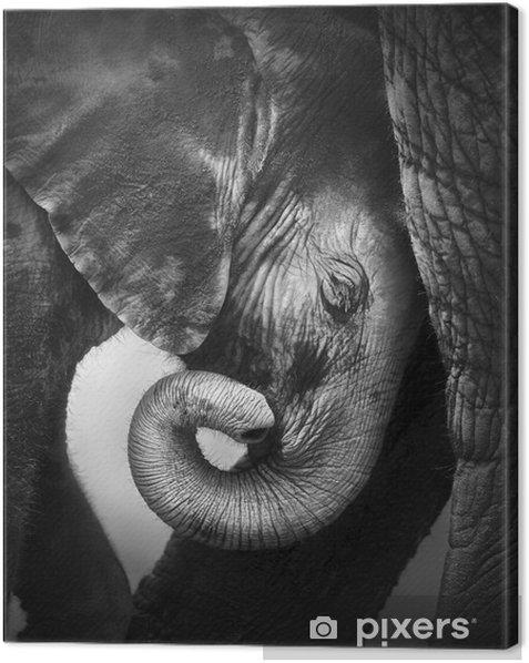 Baby elephant seeking comfort Canvas Print - Themes