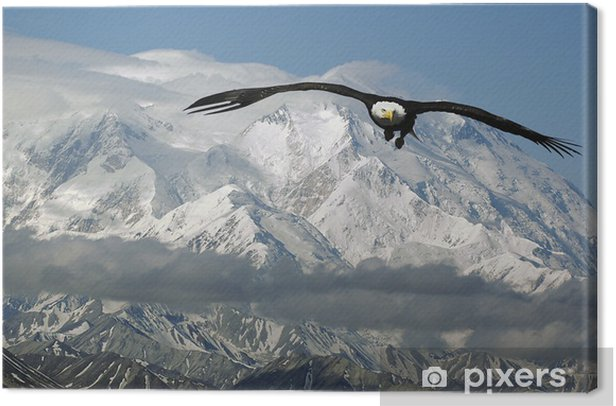 bald eagle in mountains Canvas Print - Themes