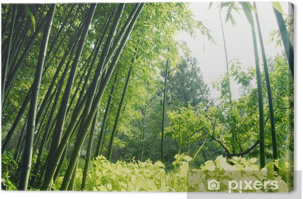 Bamboo forest Canvas Print - Themes