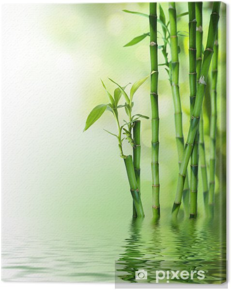 bamboo stalks on water Canvas Print - Styles