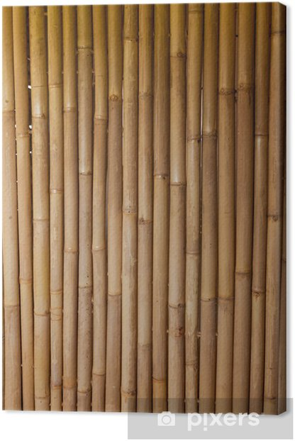 bamboo Canvas Print -