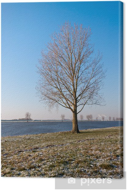 Bare solitary tree on a riverbank in the Netherlands Canvas Print - Sadness