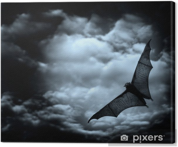 bat flying in the dark cloudy sky Canvas Print - Mammals