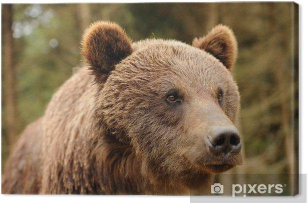Bear Canvas Print - Themes