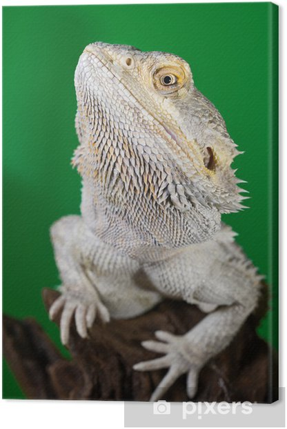 Bearded dragon reptile lizard on a branch on green blurred backg Canvas Print - Imaginary Animals