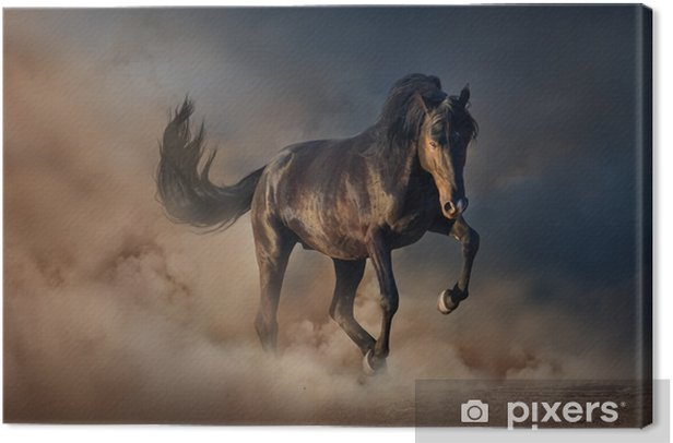 Beautiful black stallion run in desert dust against sunset sky Canvas Print - Animals