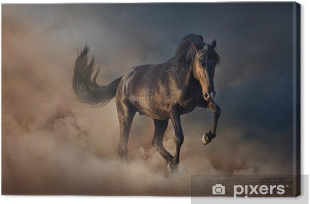 Beautiful black stallion run in desert dust against sunset sky Canvas Print - Animals