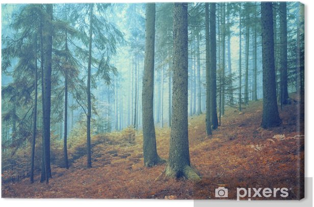 Beautiful dreamy conifer forest. Color filter effect used. Canvas Print - Landscapes