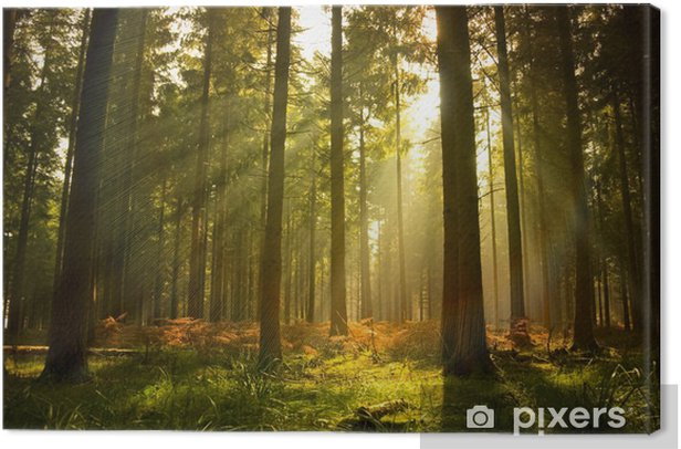 Beautiful forest Canvas Print - Styles