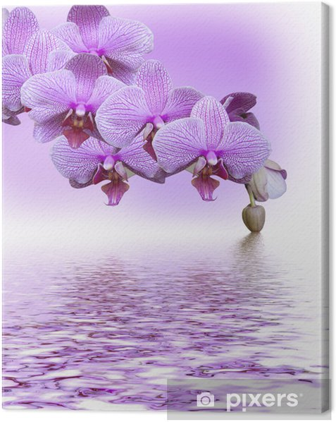 Beautiful lilac orchid Canvas Print - Themes