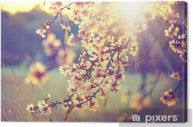Beautiful nature scene with blooming tree and sun flare Canvas Print - Themes