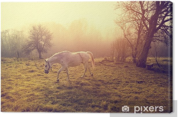 Beautiful white horse Canvas Print - Animals