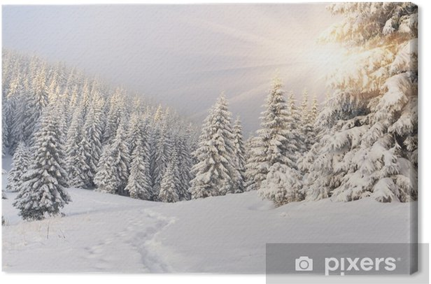 Beautiful winter landscape in the mountains Canvas Print -