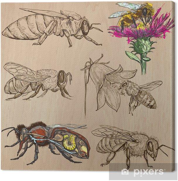 bees, beekeeping and honey - hand drawn vector pack 2 Canvas Print - Mammals