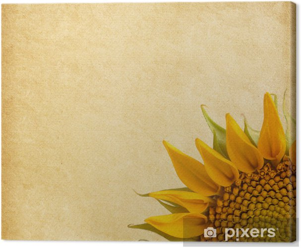 Beige background. aged paper texture with sunflower Canvas Print - Textures