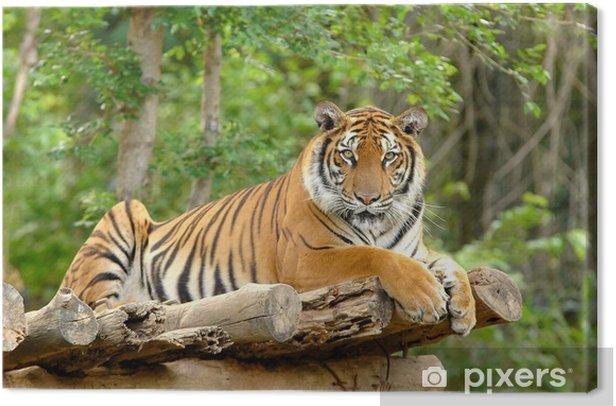 bengal tiger Canvas Print - Themes