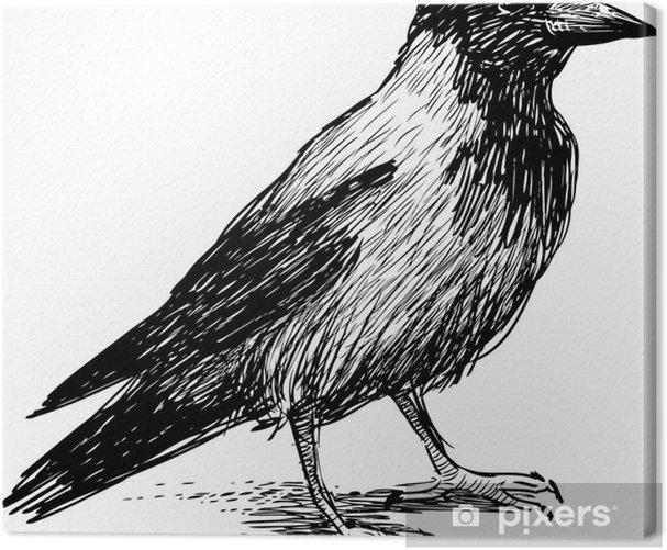 big crow Canvas Print - Birds