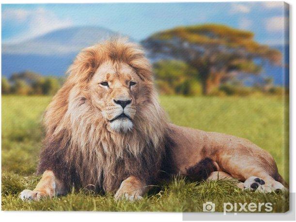 Big lion lying on savannah grass. Kenya, Africa Canvas Print - Themes