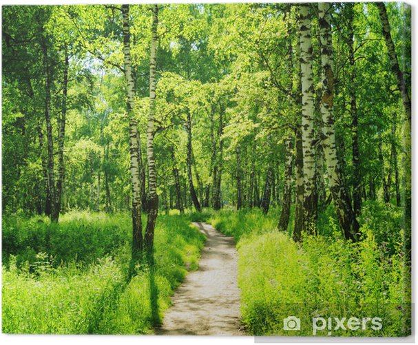 Birch forest on a sunny day. Green woods in summer Canvas Print - Forest