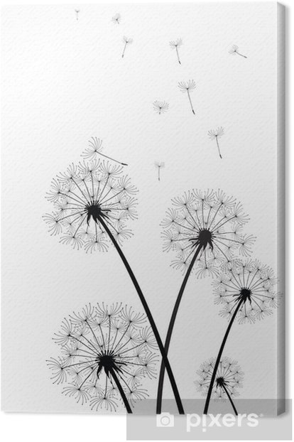 black and white dandelions vector Canvas Print - Styles