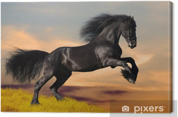 Black horse galloping in the sunset Canvas Print - Themes