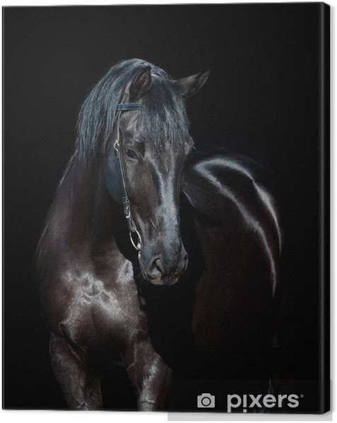 Black horse isolated on black background Canvas Print - iStaging