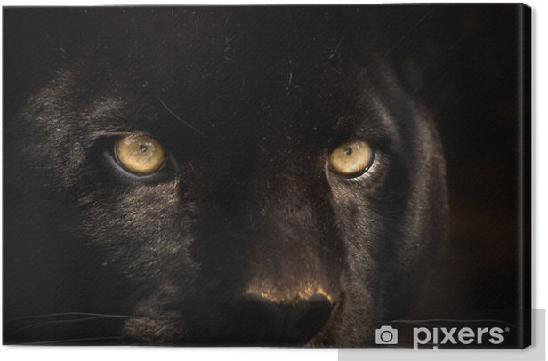 black panther Canvas Print - iStaging