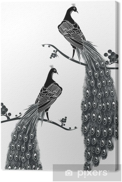 black peacock Canvas Print - Birds
