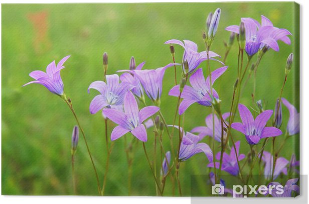 Blooming bluebells Canvas Print - Flowers