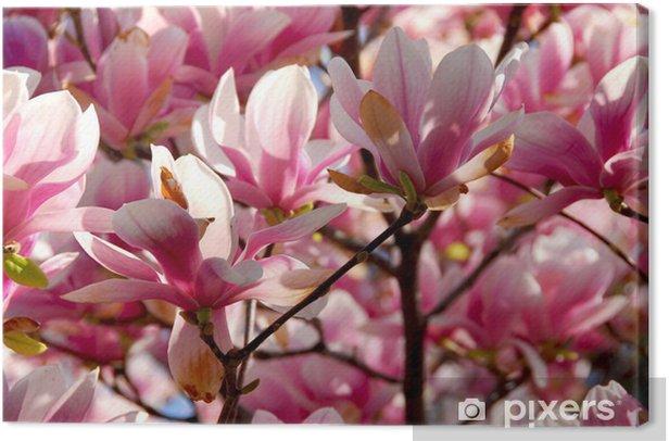 blooming magnolia Canvas Print - Themes