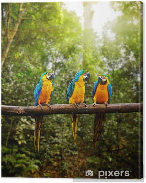 Blue-and-Yellow Macaw Ara ararauna in forest Canvas Print - Themes